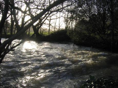 Stream inBlarney