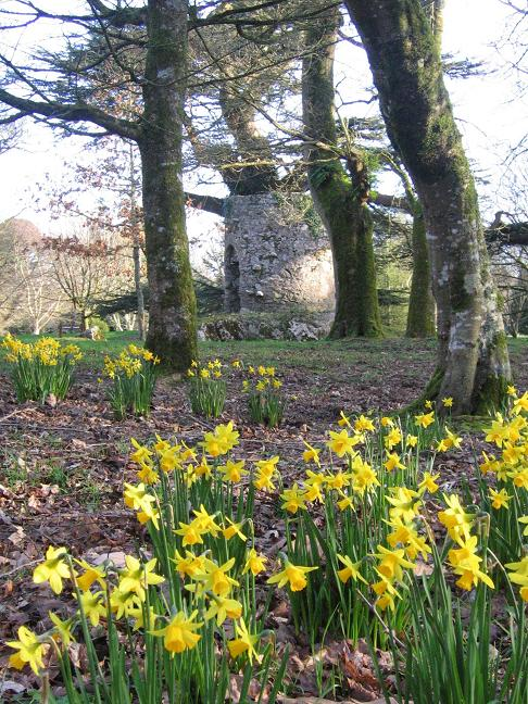 Daffodils and Lookout Tower