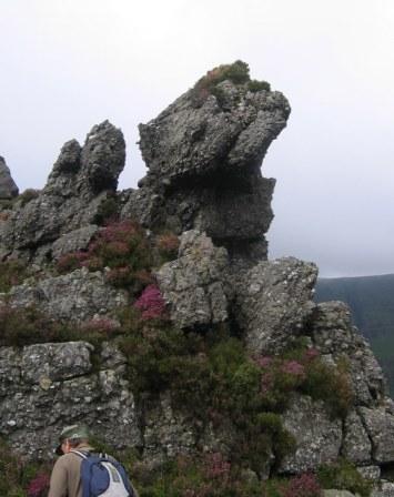 A rock outcrop